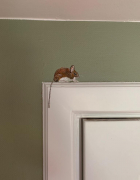 mouse in the house 2